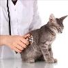 Ветеринарные клиники в Дзержинске